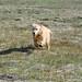 Lily in Van Norden meadow-01 5-12-14