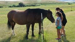 4th of July (Tracy Hunter) Tags: ranch car picnic 4thofjuly desoto monatana