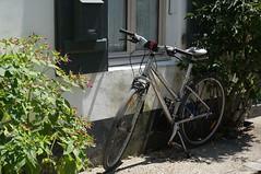 R island's queen... (majolie46) Tags: bicycle sport bicyclette petitereine moyendetransport