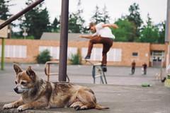 Beaukeh (Jake Arciniega) Tags: chihuahua oregon canon portland 50mm skateboarding bokeh 7d pnw 50mm18ii pomchi streetskating vsco tacticsboardshop vscofilm vscocam