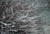 01.2017 (nnnnikt) Tags: plants sticks frost frostyair winter film filmphotography analoguephotography kodak 50mm pentaxme