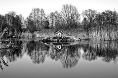 """ Wintertime Poetry ""  © 16. February 2017 by Silva Wischeropp aka Silva Capitana (SILVA CAPITANA) Tags: wintertimepoetry winter wintertime poetry nature lake trees water winterlake landscape blackandwhite black white grey abstract abstraction december plants forest ruralidyll photography photo waterreflection reflection monochromeart mono monochrome monochrom fineart season aquatic dream bw"