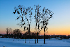 Winter session (Nefertar) Tags: winter zima landscape nature drzewa trees tree natura snieg snow goldenhour zlotagodzina luty february zamosc canon