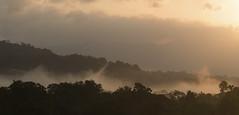 Colombia. (richard.mcmanus.) Tags: colombia bahiasolano southamerica dawn clouds rainforest trees panorama landscape mcmanus choco