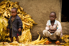 The tobacco growers (francescadistefano) Tags: poverty africa people black colour smile canon children village child african poor young smiles serengeti tobacco tabacco sleeves canoneos7d francescadistefano