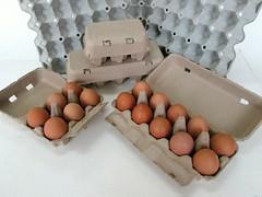 แผงไข่กระดาษ ถาดไข่กระดาษ pulp mold eggtray-10
