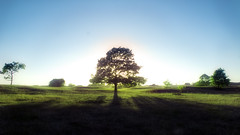 "Shining trough II ("" Ajnagraphy "" (Jnos Csongor Kerekes)) Tags: blue sunset sky sun tree green nature grass leaves landscape leaf flare shining hdr trough shiningtrough"