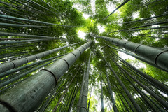 Bamboo Forest * (HarQ Photography) Tags: japan zeiss x bamboo carl fujifilm 12mm xe1 touit touit2812