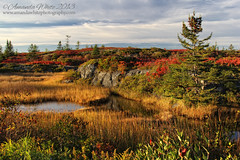 Afternoon De'light' (sminky_pinky100 (In and Out)) Tags: travel autumn fall tourism water rocks foliage coastal lateafternoon fallcolours stonehurst omot cans2s imageexcellence masterclasselite thenewmasterclass masterclassexhibtion