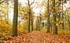 Forest Lage Vuursche (Alex Verweij) Tags: autumn trees red colour tree yellow forest canon walking bomen colours wandelen herfst boom bos geel rood 1022mm lage vuursche kleur wandelaars alexverweij