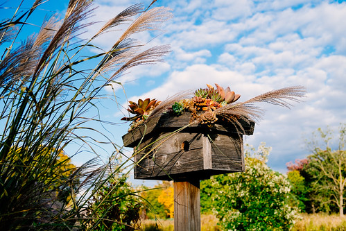 birdhouse cantigny