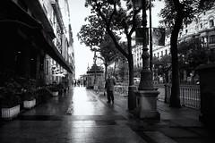 Despus de la lluvia (JAIRO BD) Tags: madrid espaa spain espanha madri jbd despusdelalluvia