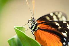 Butterfly (sillie_R) Tags: butterfly