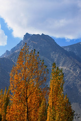 The heights of the mountain (C@MARADERIE) Tags: blue autumn orange brown mountain mountains color tree nature vertical clouds colorful peak nopeople valley imagination northernareas height col