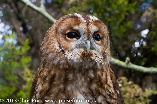 PF0292 Owl.jpg