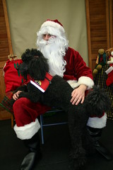 """Fwd: therapy dog for Santa Claus • <a style=""""font-size:0.8em;"""" href=""""http://www.flickr.com/photos/79036902@N02/11784397005/"""" target=""""_blank"""">View on Flickr</a>"""