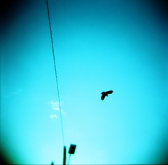 Go into the light (liquidnight) Tags: above seattle travel sky film birds analog mediumformat flying holga wings lomo xpro lomography crossprocessed solitude kodak toycamera flight lookup powerlines cables journey wires dreamy analogue expired crows vignetting ektachrome overhead capitolhill 120n expiredfilm crossover e100s