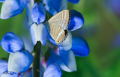 butterfly (Farhana Arshi) Tags: nature butterfly insects cannon