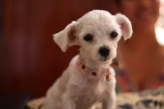 Estrela (Karina Menezes C.) Tags: dog puppy cachorro