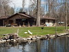 Ducks on the Lawn (BunnyHugger) Tags: river duck michigan letterboxing albion victorypark kalamazooriver