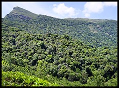 AnaMudi Shola National Park (indianature13) Tags: india mountains nature forest tea kerala april shola grasslands westernghats munnar 2015 eravikulamnationalpark indianature sholaforest highranges anamudisholanationalpark