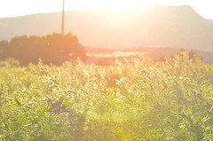 Pollen Load (JamesPollock3) Tags: sunset red orange sun mountains field lens spread weeds colorado shine view sundown wind down blow hills burn flare pollen dust gusty depth gust shone