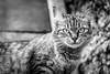 Laranjinha (Luccianna Ferreira) Tags: street brazil cats animal animals brasil cat br saopaulo sãopaulo gatos sp gato stray rua alameda animais gatinho gatinhos viralata rajada laranjinha lanaminharua lánaminharua animalderua ruasantoaristides