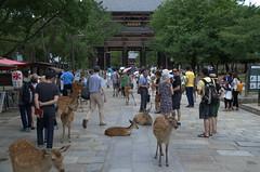 Entrance before Todai-ji