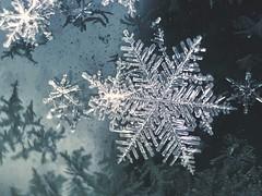Big beautiful flake (jilllian2) Tags: snowstorm nature ice snowcrystal frozen winter macro olloclip iphone7plus