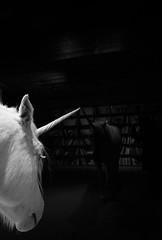 * (elisachris) Tags: einhorn unicorn mystical dark ricohgr schwarzweis blackandwhite littledoglaughednoiret