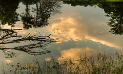Sky & tree reflection (Rick Smotherman) Tags: wood trees sky nature water leaves clouds canon landscape outdoors morninglight spring pond hiking may overcast 7d cloudysky buschwildlife canon7d canon1585mmlens