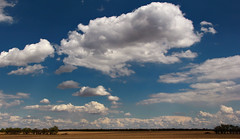 White Whale (Or Perhaps A Plump Beefy...) In The Prairie Sky (LostMyHeadache: Absolutely Free *) Tags: trees sky nature field grass clouds canon landscape spring day cloudy horizon shapes whale prairie mobydick davidsmith whitewhale hermanmelville shapesintheclouds calgaryalbertacanada eos60d