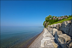 Lilacs & Chestnuts By Hazy Lake Ontario (Jeannot7) Tags: ontario lakeshore lakeontario horsechestnut lilacs cobourg
