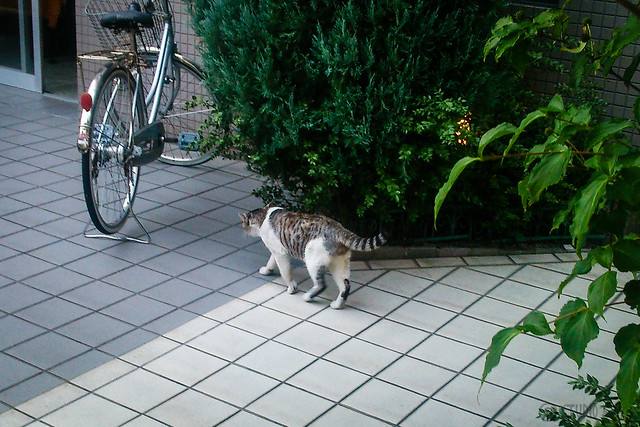 Today's Cat@2013-08-11