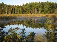 IMG_0728 (Dan Correia) Tags: amherst shadows swamp reflection 15fav topv111 topv333 topv555 topv777 510fav
