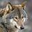 whisperwolf icon