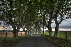 The Dark Hedges (Gareth Wray Photography -Thanks = 3 Million Hits) Tags: road county old family trees ireland sunset summer vacation irish sun house holiday game tree history abandoned