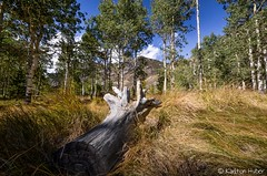 Secret Meadow (www.karltonhuberphotography.com) Tags: california autumn sky field grass clouds log handheld aspens downlow wormseyeview easternsierra sigma1020mm mountainpeaks 2013 nikond7000 karltonhuber