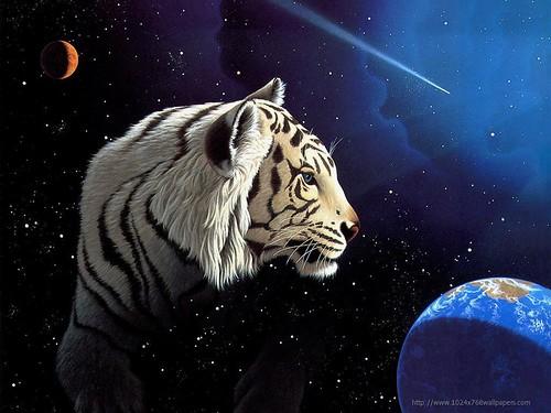 tigreworld