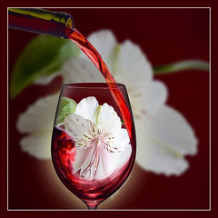 Red with a Floral Bouquet (Yvonne Warriner) Tags: flower glass flora wine bouquet wineglass redwine