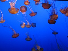 "The Monterey Bay Aquarium • <a style=""font-size:0.8em;"" href=""http://www.flickr.com/photos/109120354@N07/11043039043/"" target=""_blank"">View on Flickr</a>"