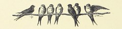 Image taken from page 96 of 'Woodland Romances; or, Fables and Fancies'