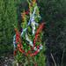 Trees_of_Loop_360_2013_053