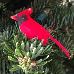 """#xmas #tree #red #bird • <a style=""""font-size:0.8em;"""" href=""""https://www.flickr.com/photos/61640076@N04/11369842253/"""" target=""""_blank"""">View on Flickr</a>"""