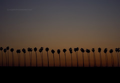California Sunset (snippets_from_suburbia) Tags: