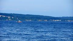 Patrolling @whidbey island (Paras Suri) Tags: waterfront sony alpha sonyalphadslr