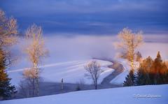 Frie d'hiver... (Gabriel Lafrenire) Tags: landscape eau hiver champs neige paysage arbre brume glace matin rivre rivirelalivre