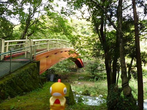 Scraggy in Susono, Shizuoka 9 (Goryu Falls)