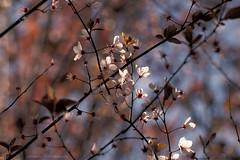 I colori e le luci di primavera (Ale*66*) Tags: primavera nature colors canon petals spring blossom bokeh natura fiori tamron petali colori sfondo 70d pistilli