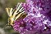 Primavera II (Andrés Entero) Tags: flores primavera canon eos colores 7d mariposa lilas 24105l